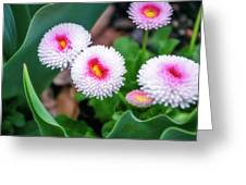 Bright Spring Flowers  Greeting Card