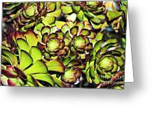 Bright Succulents Greeting Card
