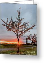 Bright Sun With Long Red Rays Shines Near The Trunk Greeting Card