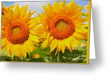 Bright Sunflowers Greeting Card