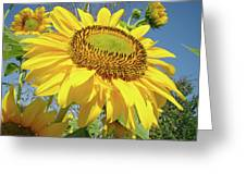 Bright Sunny Happy Yellow Sunflower 10 Sun Flowers Art Prints Baslee Troutman Greeting Card