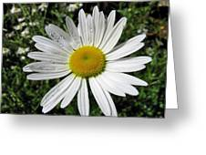Bright White Flower With Water Droplets Greeting Card