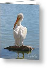 Bright White Pelican Greeting Card