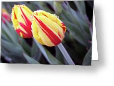 Bright Yellow And Red Tulips Greeting Card