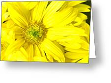 Bright Yellow Daisy Greeting Card