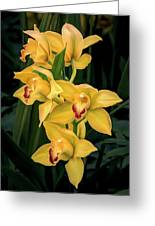 Bright Yellow Orchids Greeting Card