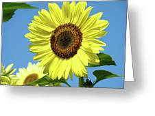Bright Yellow Sunflower Art Prints Blue Sky Baslee Troutman Greeting Card