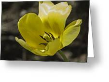 Bright Yellow Tulip Squared Greeting Card