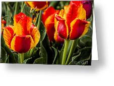 Brightened Day Greeting Card