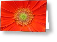 Brighteyes Greeting Card