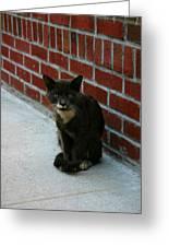 Brighton Cat Greeting Card