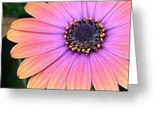 Briliant Colored Daisy Greeting Card