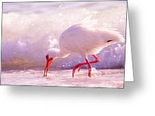Brilliant Beauty Cortez Beach Greeting Card