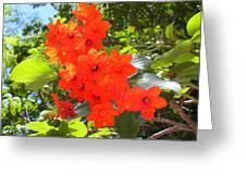 Brilliant Blossoms Greeting Card
