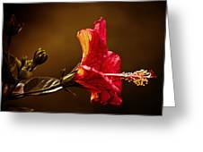 Brilliant Hibiscus Greeting Card