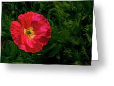 Brilliant Icelandic Poppy Greeting Card