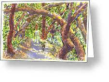 Briones Forest Near Springhill Road Greeting Card