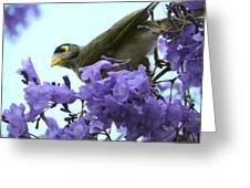 Brisbane Spring Greeting Card
