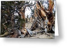 Bristlecone Forest, Ca November 2105 Greeting Card