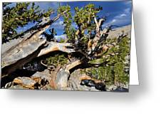 Bristlecone Great Basin Landscape Greeting Card