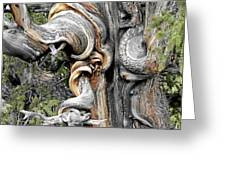 Bristlecone Pine - 'i Am Not Part Of History - History Is Part Of Me' Greeting Card