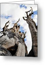 Bristlecone Pine Great Basin Greeting Card