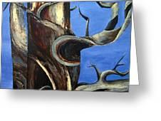 Bristlecone Tree No. 2 Greeting Card