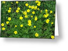 Bristly Buttercup Greeting Card