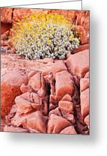 Brittlebush Bloom Greeting Card