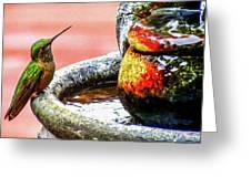 Broad-tailed Hummingbird At Water Fountain Greeting Card