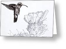 Broadbilled Hummingbird Greeting Card