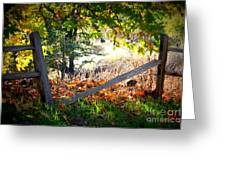 Broken Fence In Sycamore Park Greeting Card