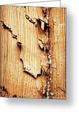 Broken Old Stump Spruce Greeting Card
