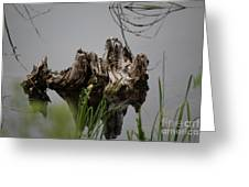 Broken Root Stump In Water  Greeting Card
