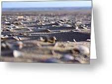 Broken Shells Greeting Card