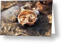 Broken Whelk Shell Greeting Card