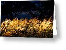 Brome Grass In A Field Near Princeton Greeting Card