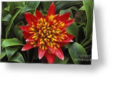 Bromeliad Blooming Greeting Card