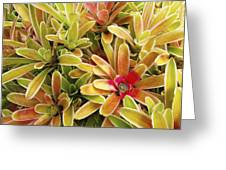 Bromeliad Brightness Greeting Card by Ron Dahlquist - Printscapes