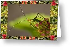 Bromeliad Grasshopper Greeting Card