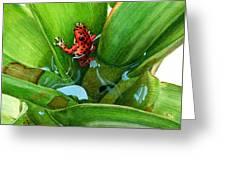 Bromeliad Microhabitat Greeting Card