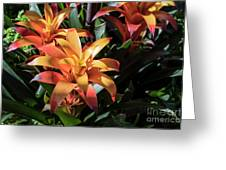 Bromeliads Greeting Card