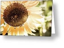 Bronze Sunflower Greeting Card