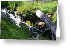 Brook And Deadfall Greeting Card