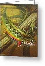 Brook Trout Cover Greeting Card