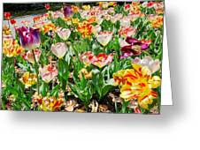 Brookgreen Gardens Tulips Greeting Card