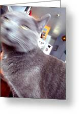 Brooklyn Cat Greeting Card