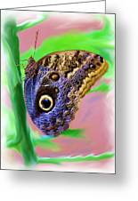 Brown And Blue Butterfly 2 Greeting Card