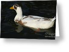 Brown And White Duck Greeting Card