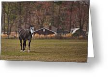 Brown And White Horse Greeting Card